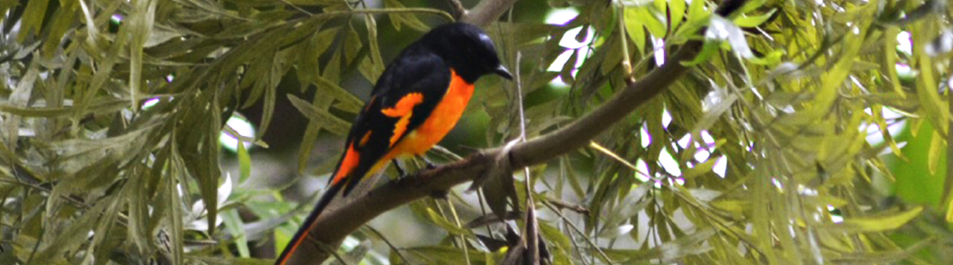 oland-gallery-birding